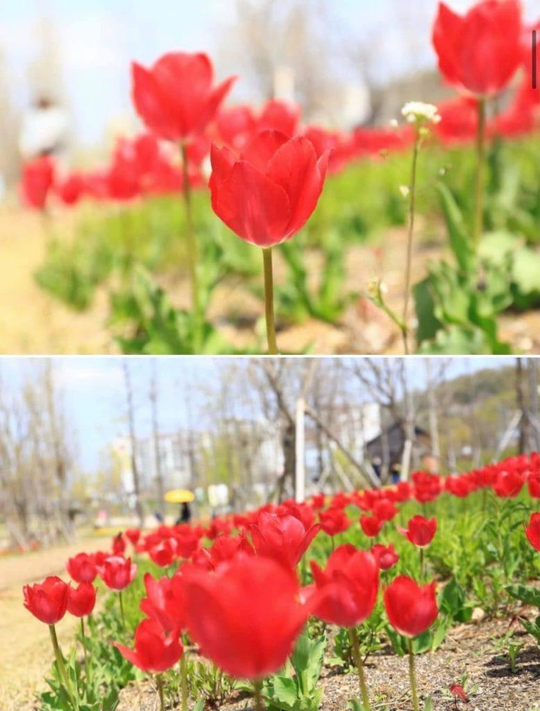 Hình ảnh từ Hàn Quốc Kia Rồi: 171296648 1859353627557825 2304939575429482007 n