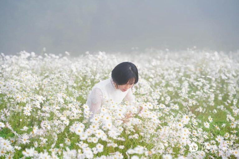 Đồi hoa Cúc họa mi ở  trên 무등산