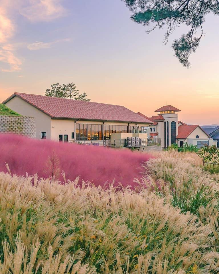 Quán cafe với vườn cỏ hồng 천안 핀스커피