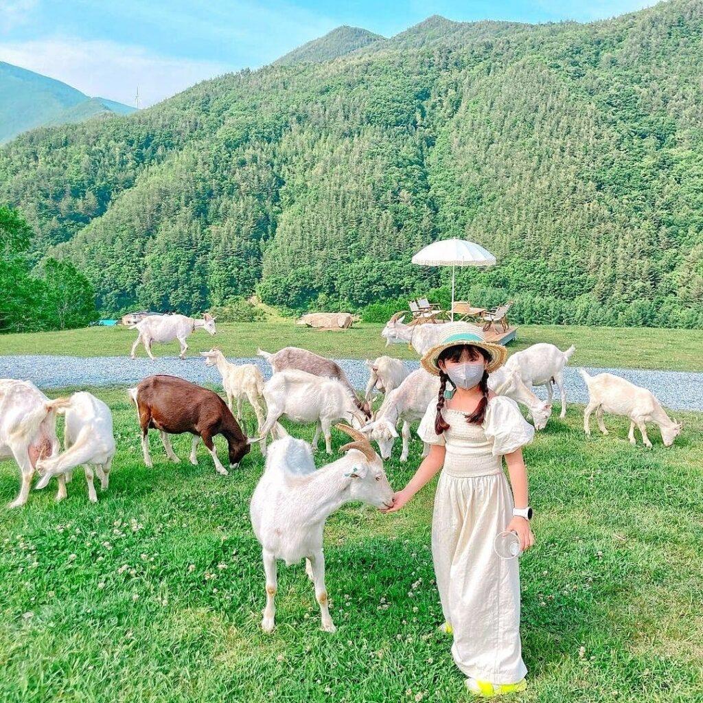 Hình ảnh từ Hàn Quốc Kia Rồi: 245447293 162144976114552 544130721184422681 n