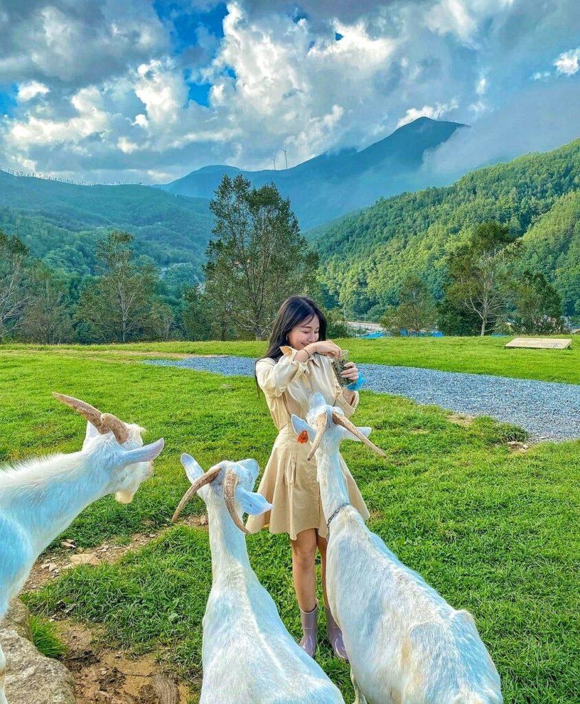 Hình ảnh từ Hàn Quốc Kia Rồi: 245493518 162145556114494 2301530642672358664 n