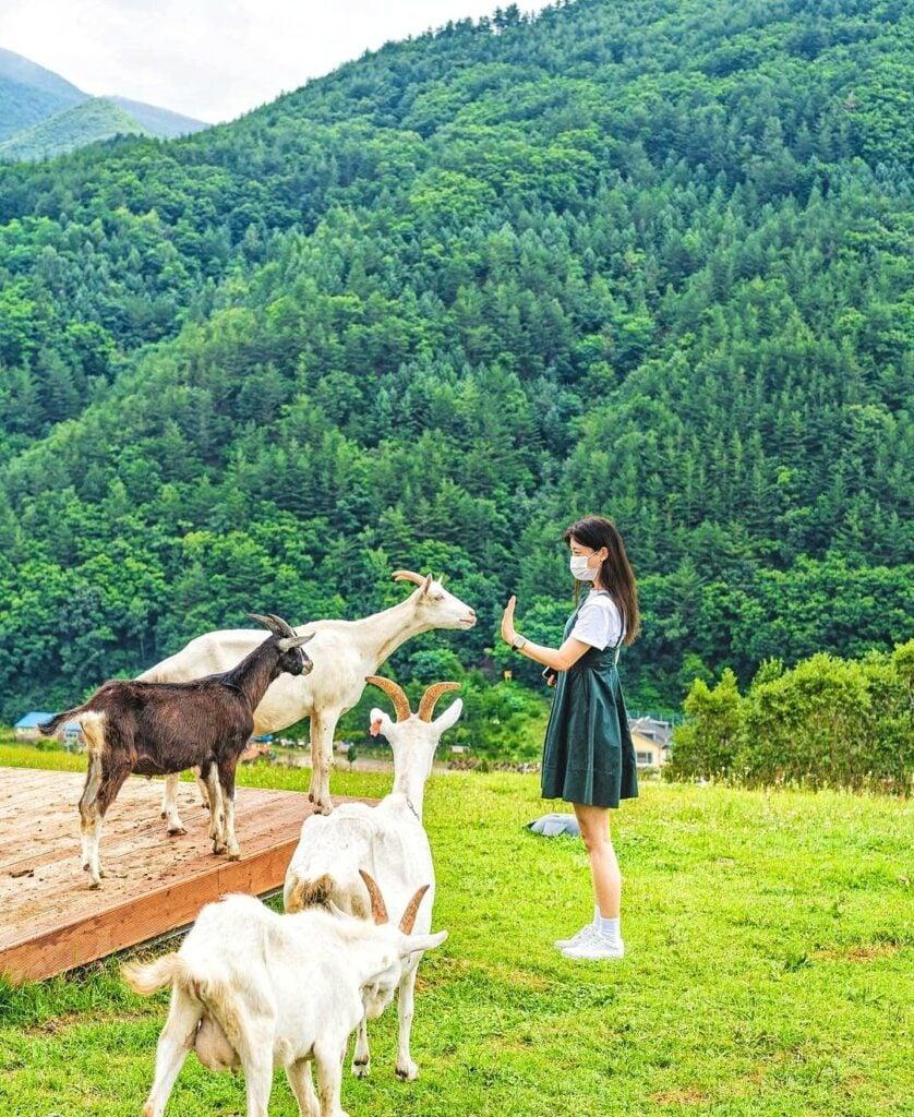 Hình ảnh từ Hàn Quốc Kia Rồi: 245508330 162145742781142 4451004997226713849 n
